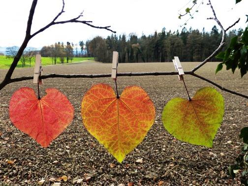 leaves-1849833_1920